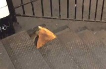 Pizza Rat Best Internet Reactions